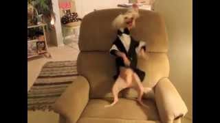 "Hairless Dancing Nathan : ""Cupid Shuffle"""
