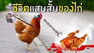 ชีวิตที่แสนสั้นของไก่_!!
