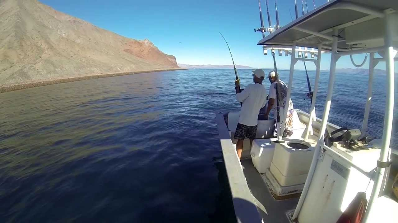 Dorado fishing in bahia de los angeles youtube for Baja california fishing