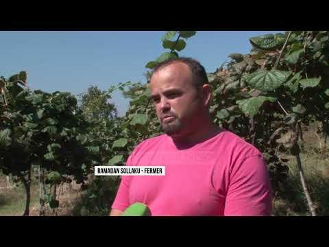 Të kultivosh kivi në Librazhd - Top Channel Albania - News - Lajme