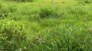 自然がいっぱいのヒイゴ池湿地。 イノシシの出現で驚きましたが、動植物...
