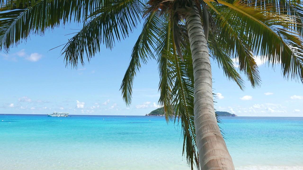 Zoom Virtual Background Feels The Sea Breeze Youtube