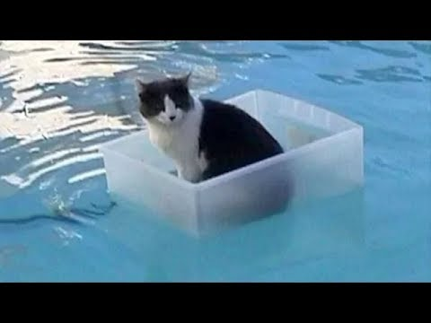 Cats Playing in Water Compilation