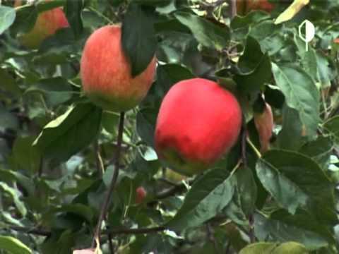 Рецепт: Варенье из яблок дольками на