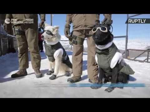 Школа собак в Чили
