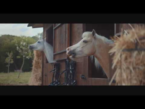 Rick Woodell - Horses laughing at a man trying to park his trailer!