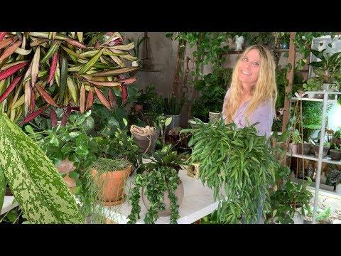 HOYA PLANT CARE 101!