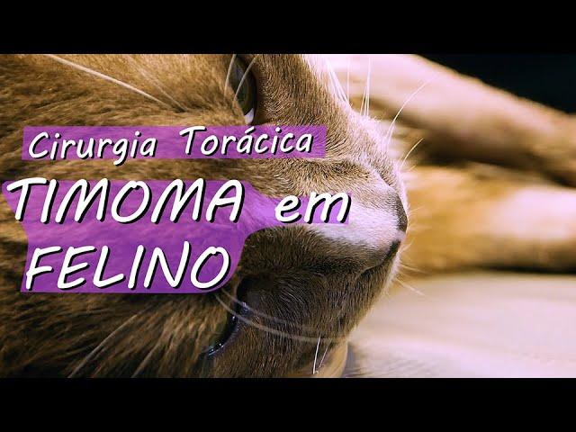 Cirurgia Torácica: timoma em felino