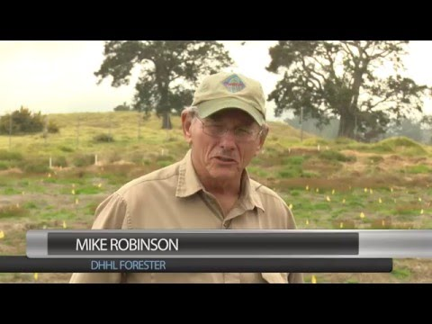Mike Robinson: Site Preparation