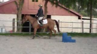 Mischief Farm - Red - Hunter/Jumper/Dressage/Eventing Gelding For Lease