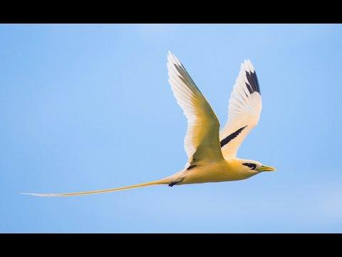 Chris Bray Photography's Christmas Island Photo Safari