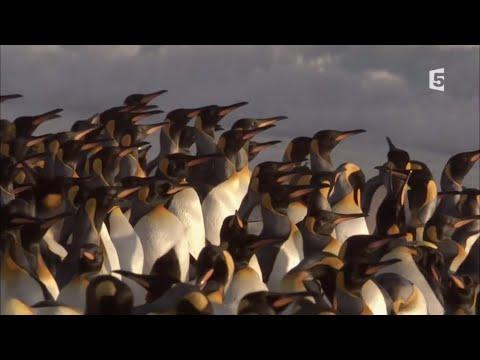 Vidéo Narration Super parents de la nature - ép. 3