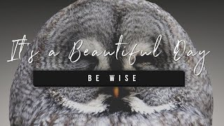 It's a Beautiful Day | Be Wise | 18 December 2020