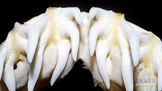 Shark Teeth | SHARK ACADEMY