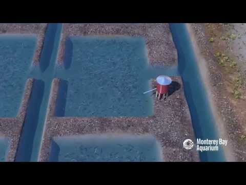 How Seafood is Farmed: Ponds