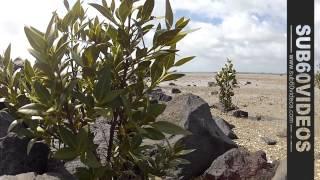 Te Atatu Peninsula - Part 01