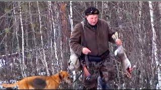 Охота по первому снегу Р.Г. Забава вл.Серов А.Ю. ,  Р.Г. Сигнал и Р.Г. Рада 8мес. вл.Шатров В.А.
