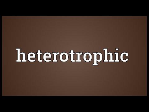 Heterotrophic Meaning