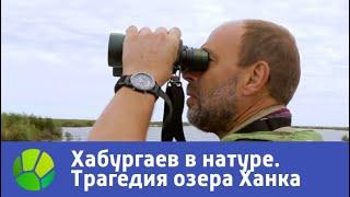 Трагедия озера Ханка. Хабургаев в натуре | Живая Планета