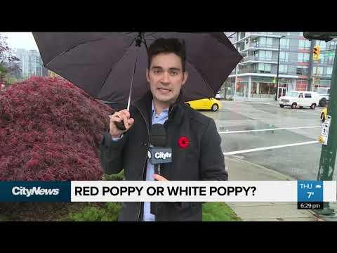 Red Poppy Or White Poppy?