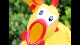 Орущая курица.Прикол