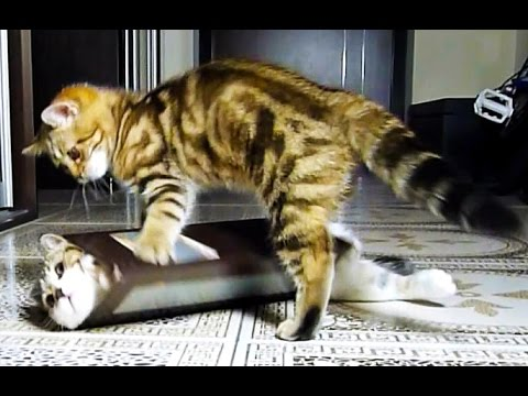 Cute Kittens and funny Cats Doing Funny Things with Boxes Videos Compilation
