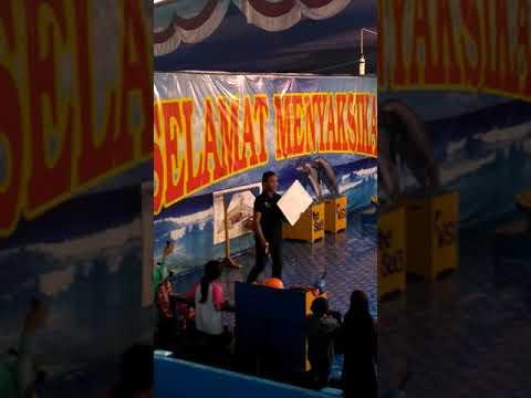 Lumba Lumba Di PTC Palembang