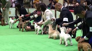 2017年4月1日に開催されたジャパンインターナショナルドッグショーでシ...