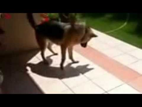 best funny animal videos compilation 2 2013 2014   youtube