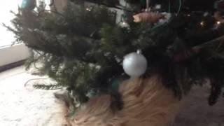 Cairn Terrier Christmas Tree Scratching Post 2013 Suki