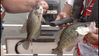 Arkansas Wildlife - S6.E12, Crappie Fishing, Crappie Research and Crappie in the Kitchen