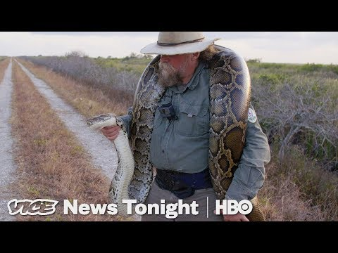 The Bounty Hunters Catching Pythons In Florida (HBO)