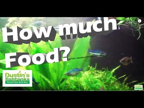 Fish Feeding Frequency - Don't Overfeed Your Fish.