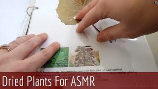 ASMR Whispering - Show & Tell (Handmade Dried Flower book)