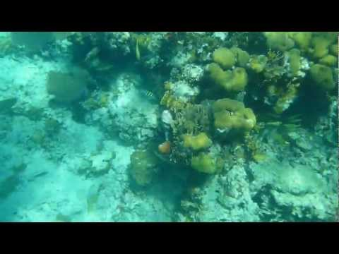 Snorkeling at the reef off the coast of Belize