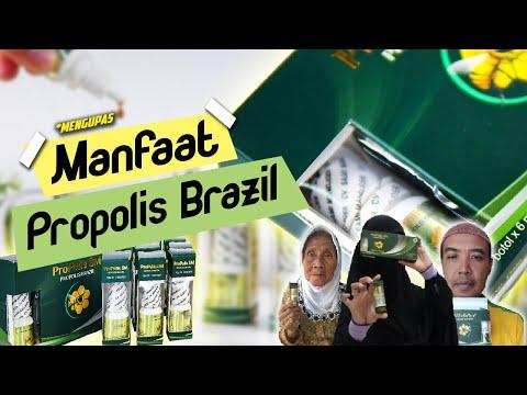 Mengupas Lebih Dalam Manfaat Propolis SM Brazil Yang Sudah Terbukti Khasiatnya