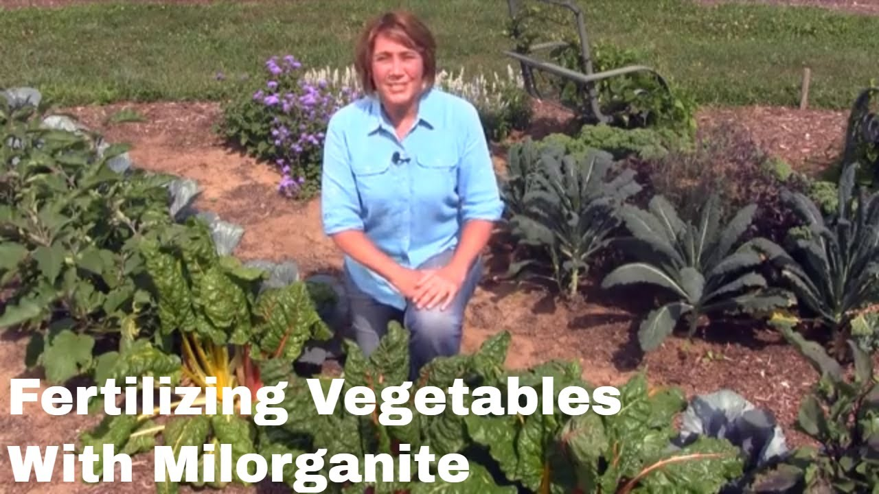 How to fertilize your vegetable garden with milorganite - When to fertilize vegetable garden ...