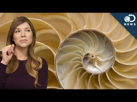 Thumbnail: The Golden Ratio vs. The Rule of Thirds