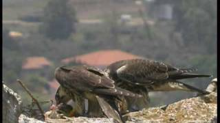 Israel - Paradise for Birds, and Bird-Lovers