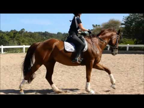 dressage lessons with Janice Usherwood - El and Red