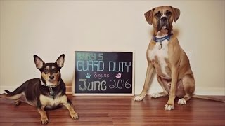 Wife Uses Dogs for Pregnancy Announcement After Years of Infertility