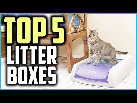 Top 5 Best Automatic Kitty Litter Boxes in 2019