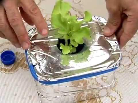 Como plantar fresas en hidroponia
