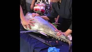 Giant Bluefin Tuna cutting show in Singapore