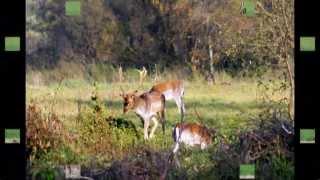 Zwierzęta leśne 2