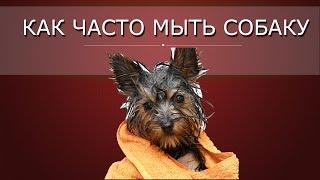 Как часто купать собаку
