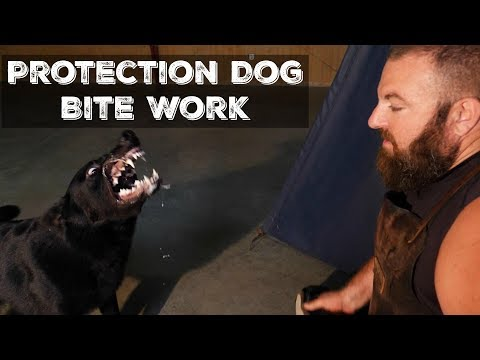 Amazing Protection Dog Bite Work Compilation 2018 K9 Security Home Executive Level Training