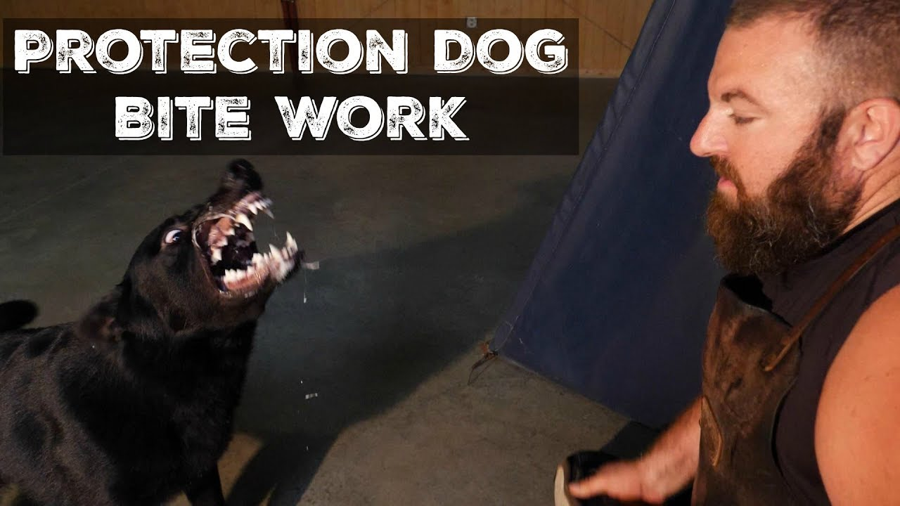 Training Dog For Protection Work