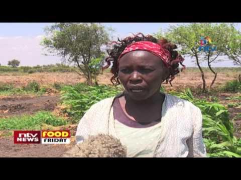 Food Friday: SMS farming in Isiolo