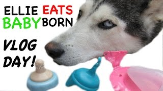 Video VLOG DAY FRIDAY Answering Questions + Puppy Eats My New Baby Born Stuff! download MP3, 3GP, MP4, WEBM, AVI, FLV Agustus 2018
